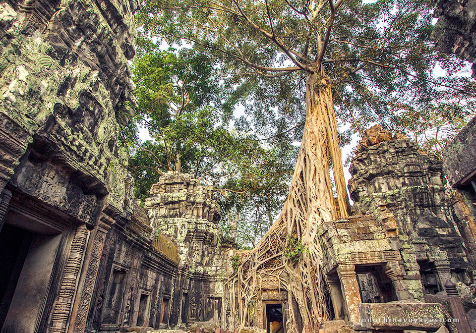 Day 12 Ta prohm