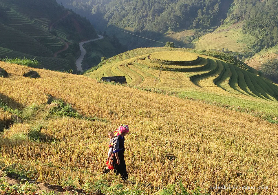 ha_giang_viet_nam_golden_rice_terrace