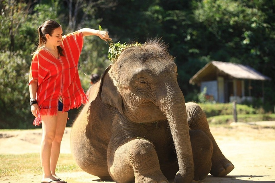 Thailand_itinerary_1_week_elephant_caring