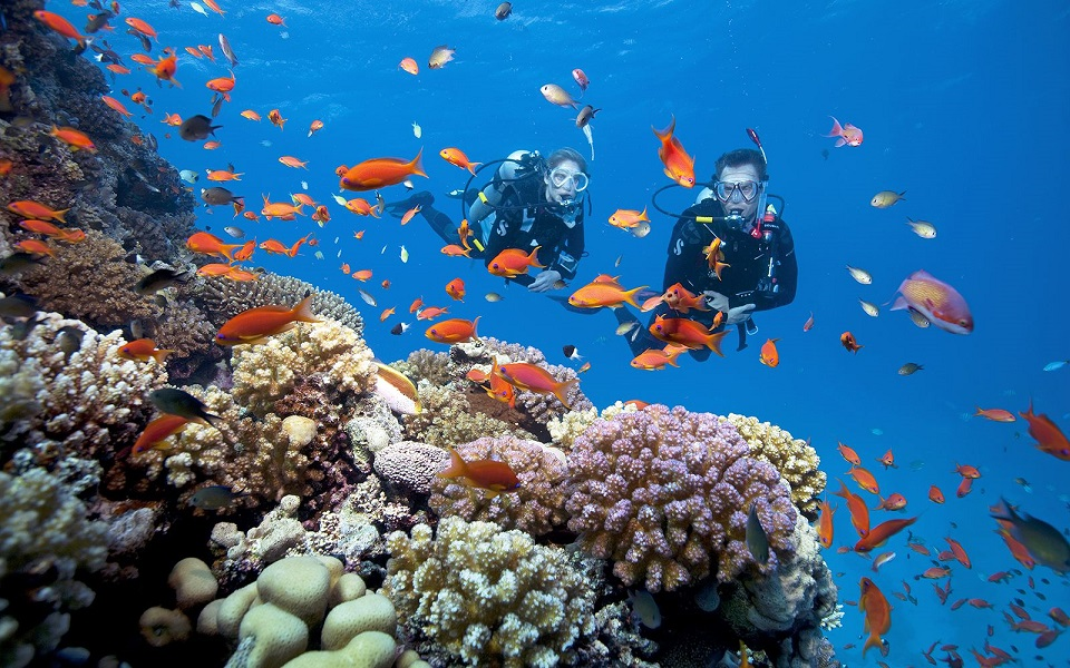 The coral diving tours