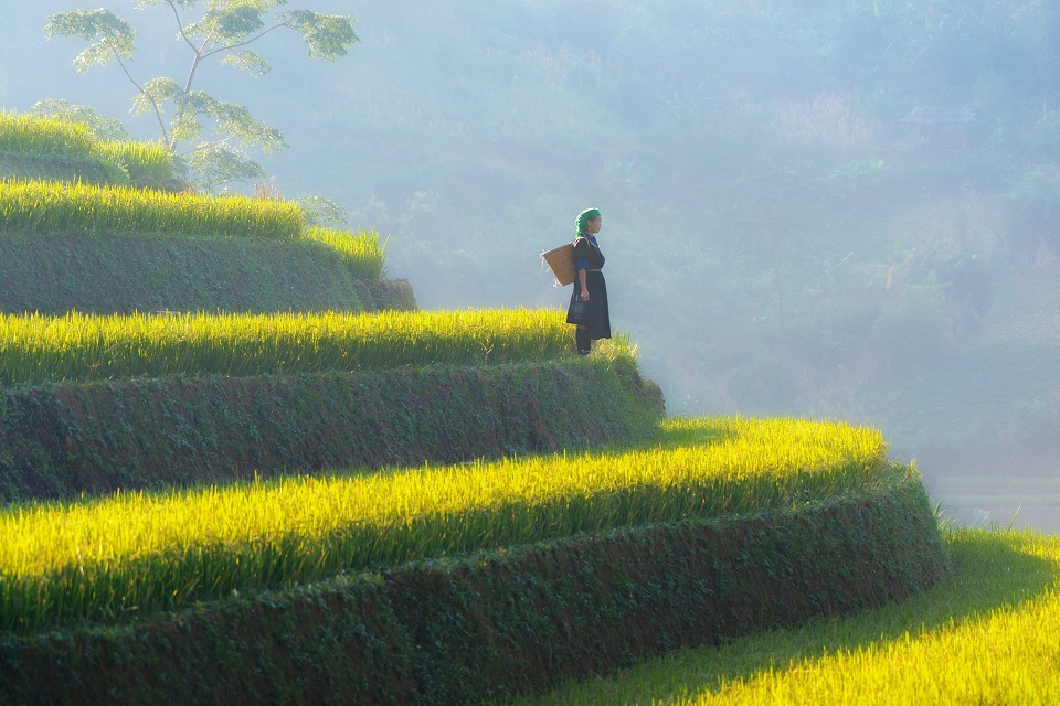 Mu Cang Chai in September