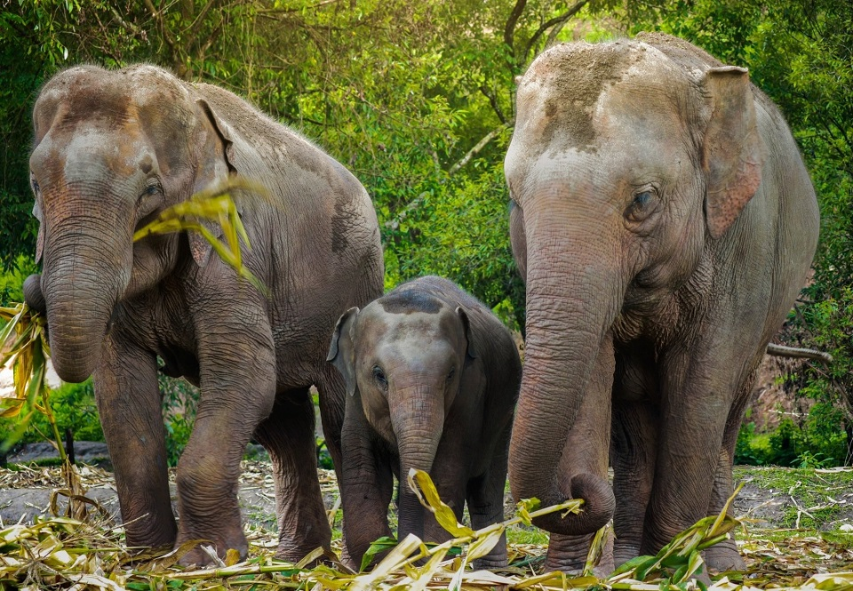 elephant sanctuaries in Thailand