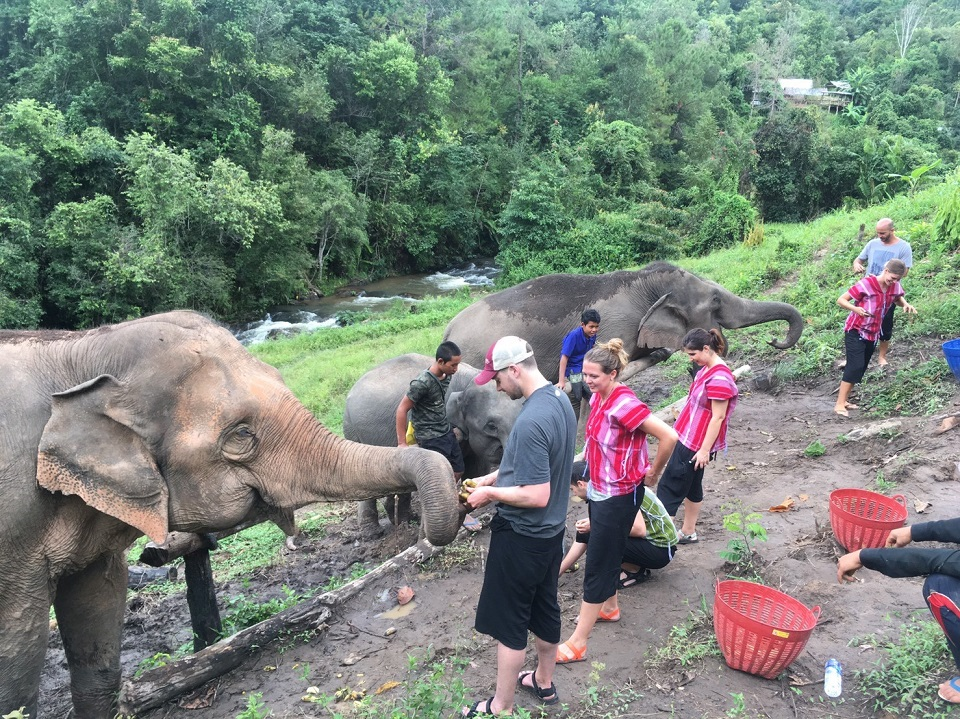 Feeding elephants at Chiang Mai