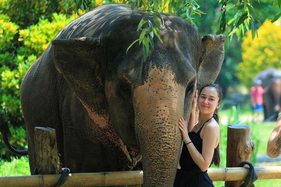 Top 3 real elephant sanctuaries in Thailand to visit