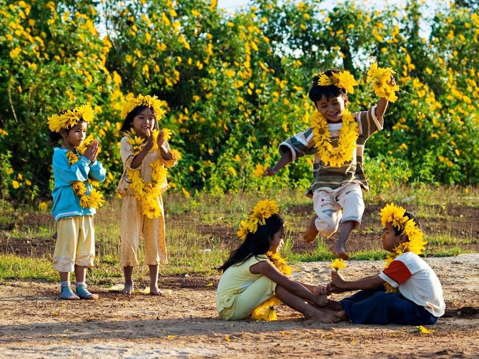 Wild Sunflowers Hill in Dalat
