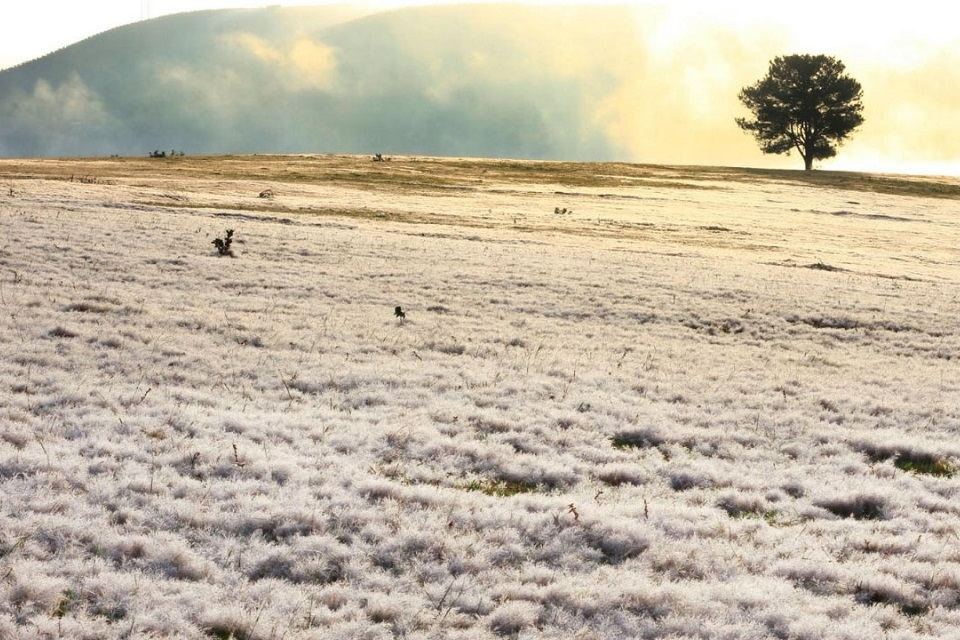 snow fields in Dalat