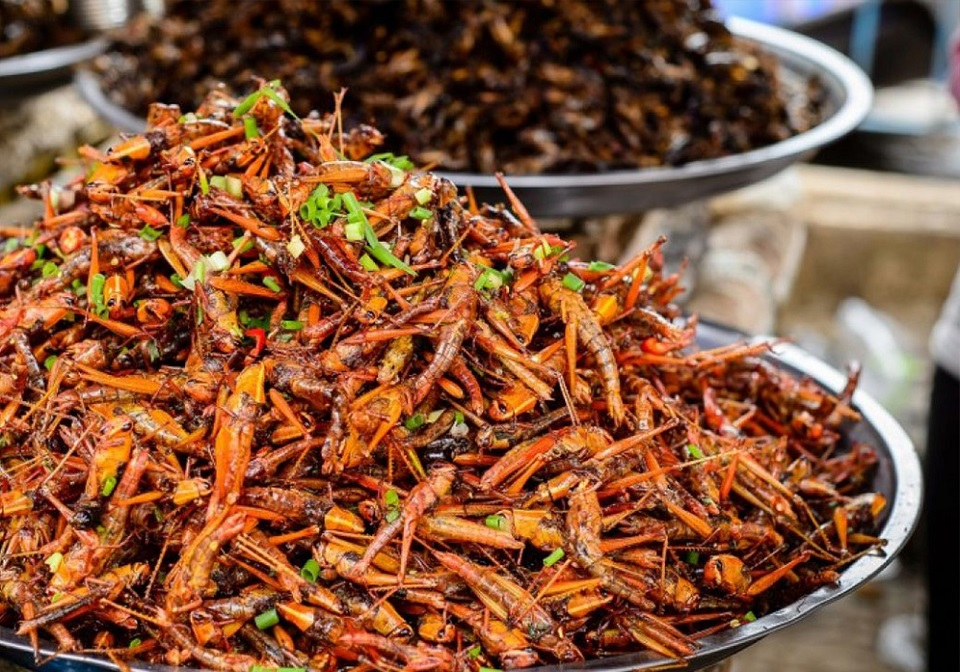 Grilled insects